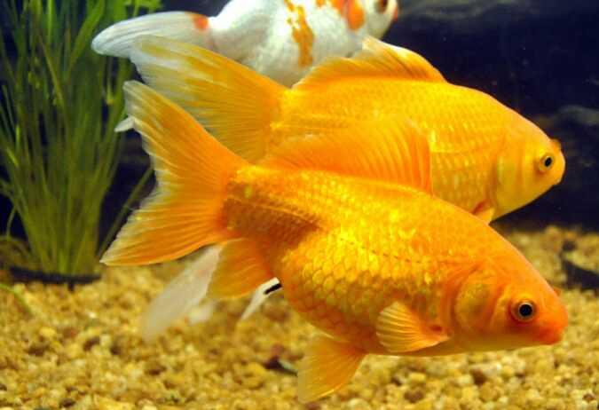 Fish Ornamental Services in Bhopal, Fish Ornamental Services